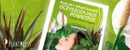 260×100 – Rośliny oczyszczające